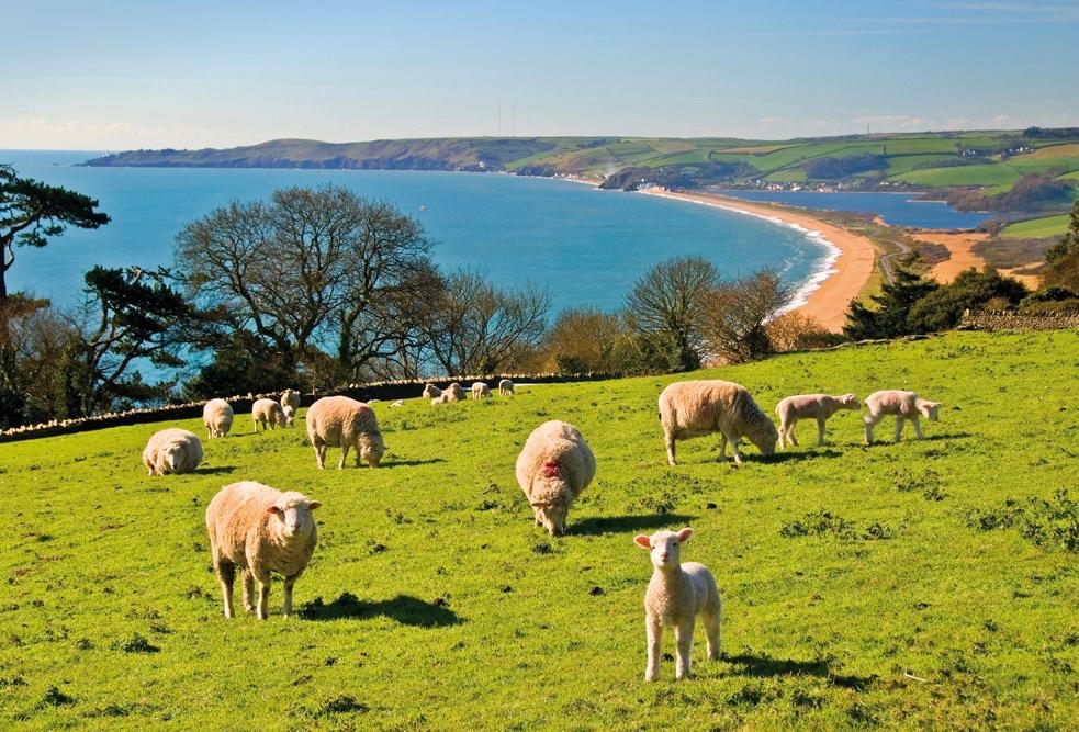 Spring wildlife in South Devon - lambs