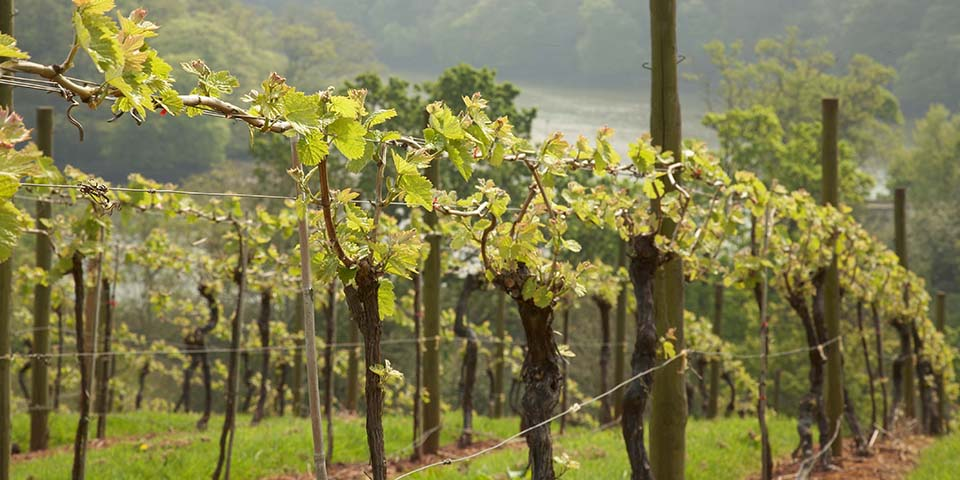 Sharpham Vineyard offers a range of delicious wines and cheeses