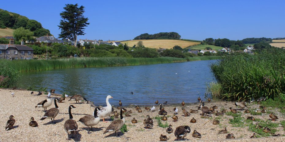 Things to do in Torcross - feed the ducks Slapton Ley