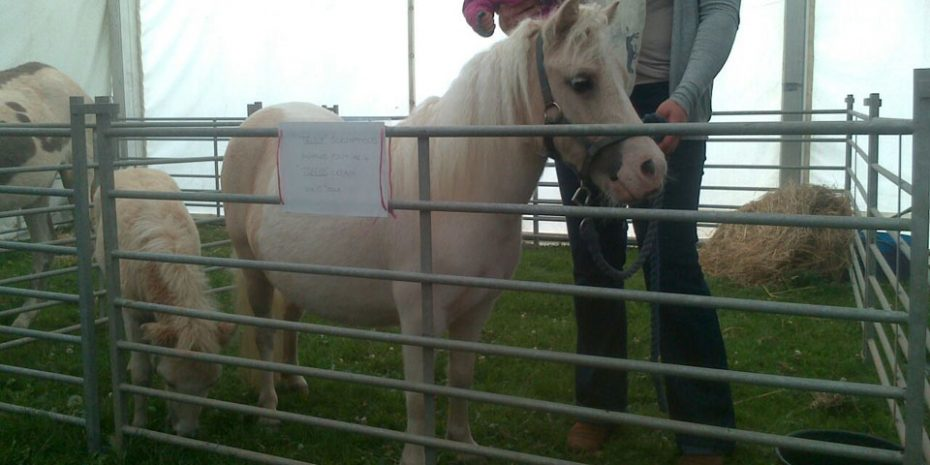 Fun days out for kids - Ponies at Kingsbridge Show