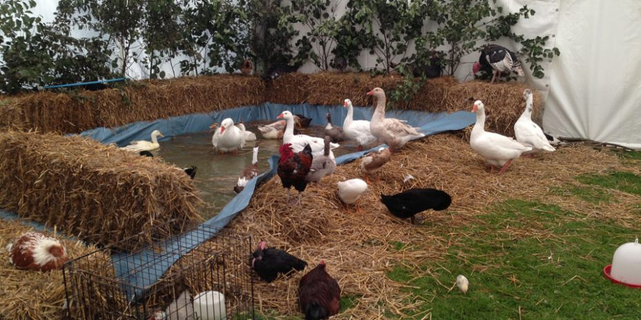 Fun days out for kids - animals at Kingsbridge Show