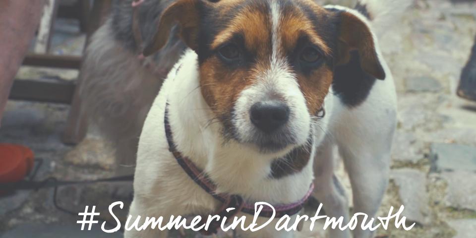 Dog - Summer holiday Dartmouth