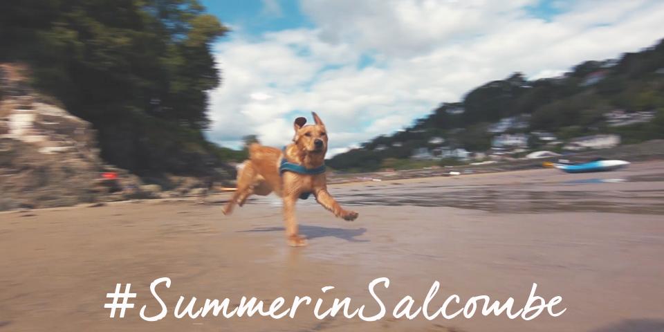 Dog - SummerinSalcombe