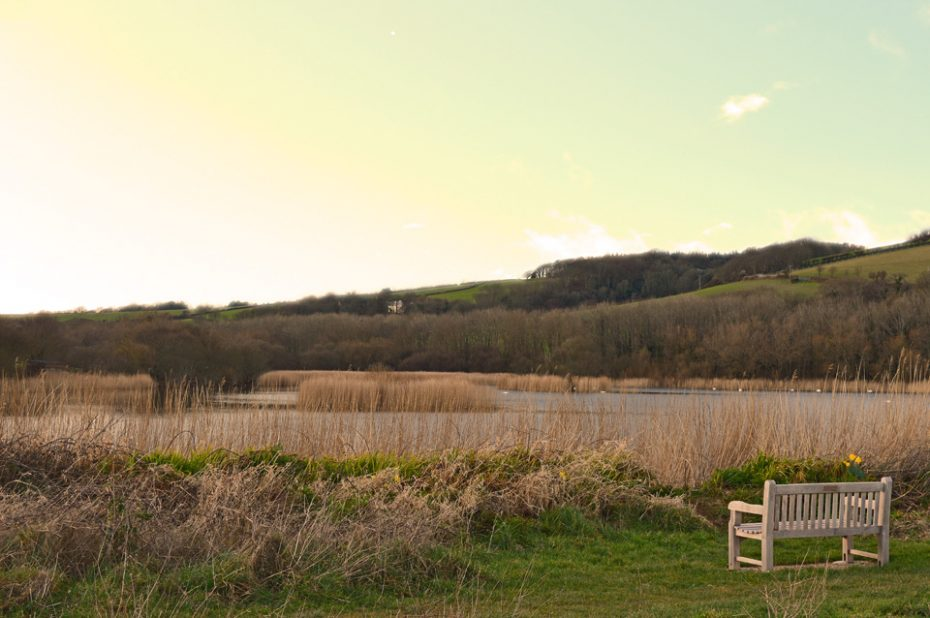 Widdicombe Ley at Beesands,, a great place for nature spotting.