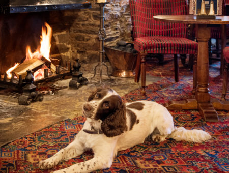 Should I make my holiday cottage dog-friendly