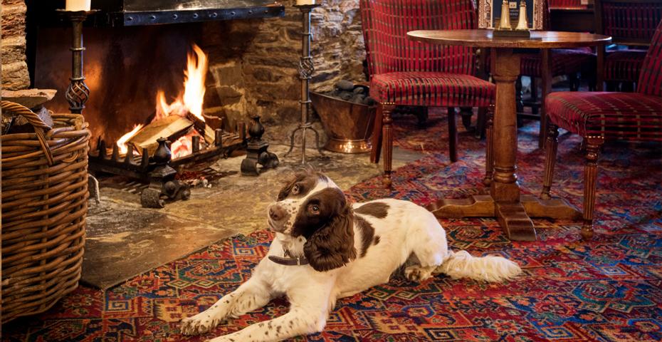 Should I make my holiday cottage dog-friendly