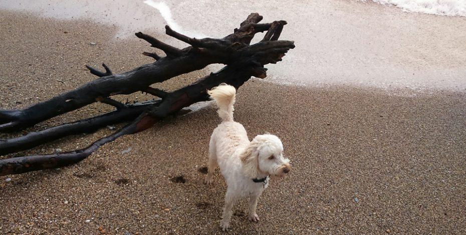 dog friendly slapton sands