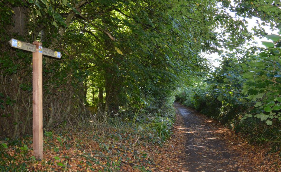 The path to Greenway