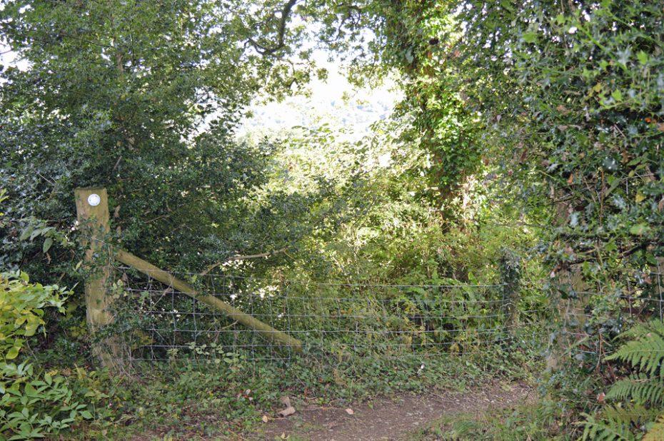 A footpath off Green Lane