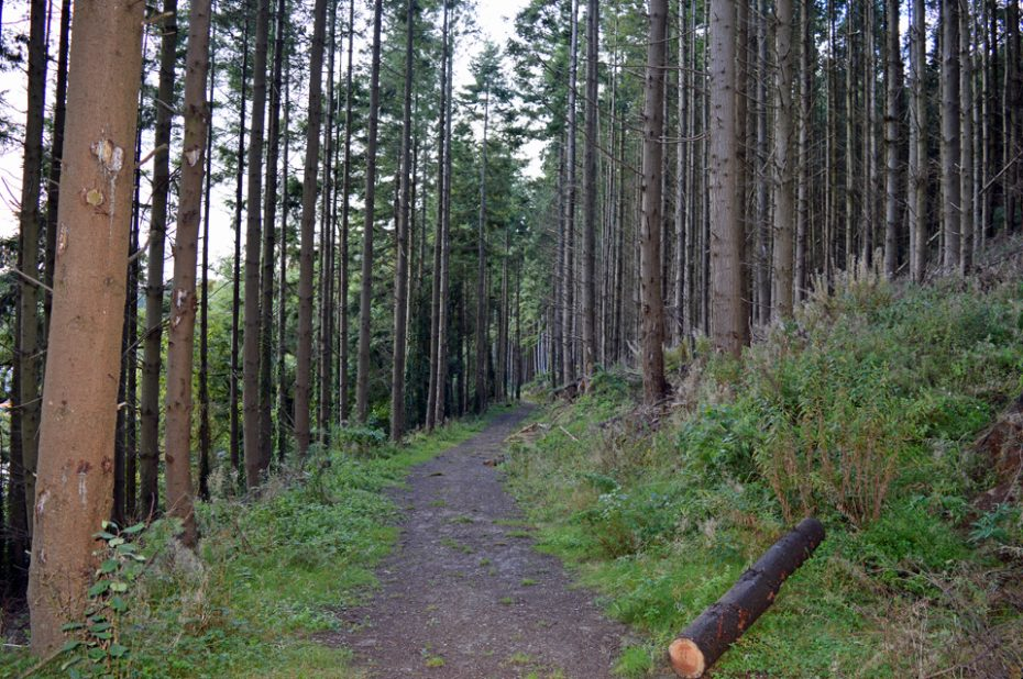 42-woodland-path
