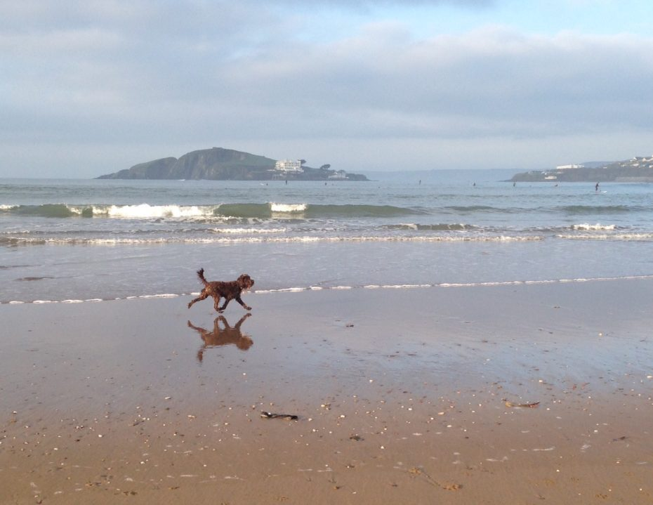 South Devon's beaches are wonderful for dogs, but beware of throwing sticks for them to catch.
