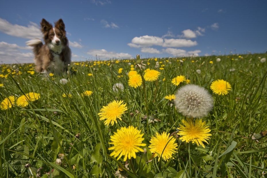 A dog has fun on a summer's day