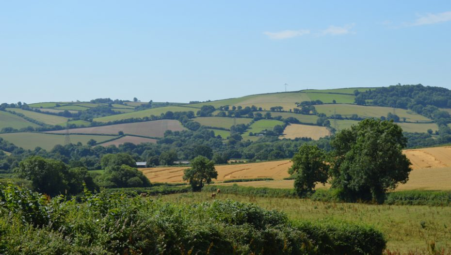 countryside-near-buckfastleigh