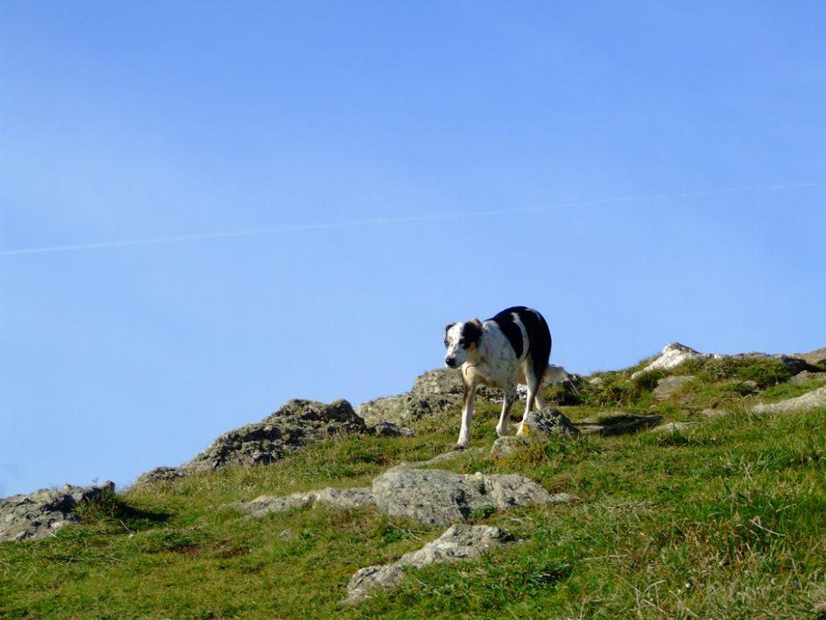 Dogs on the Coast Path