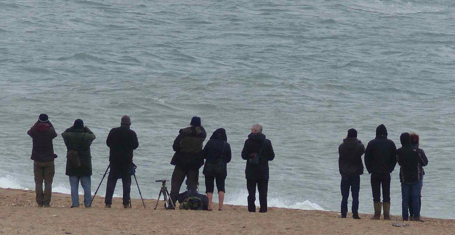 Whale watchers at Slapton (via Forest & Beach)
