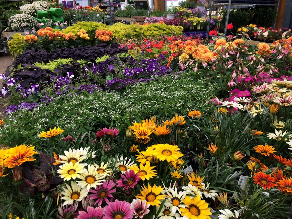An Attractive Flower Display At Endsleigh Garden Centre