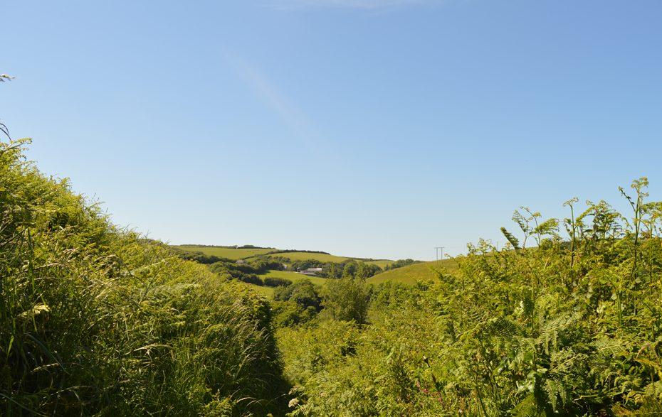 An overgrown path towards Beesands