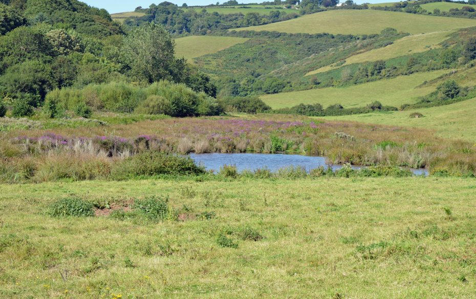 A flooded field behind Man Sands that's a haven for birdlife
