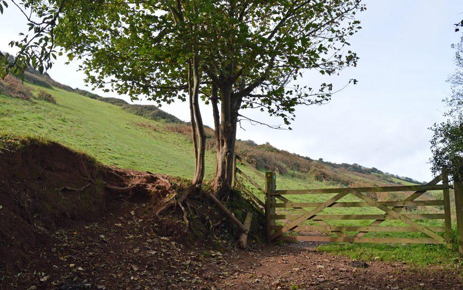 A steep hill leading towards Thurlestone