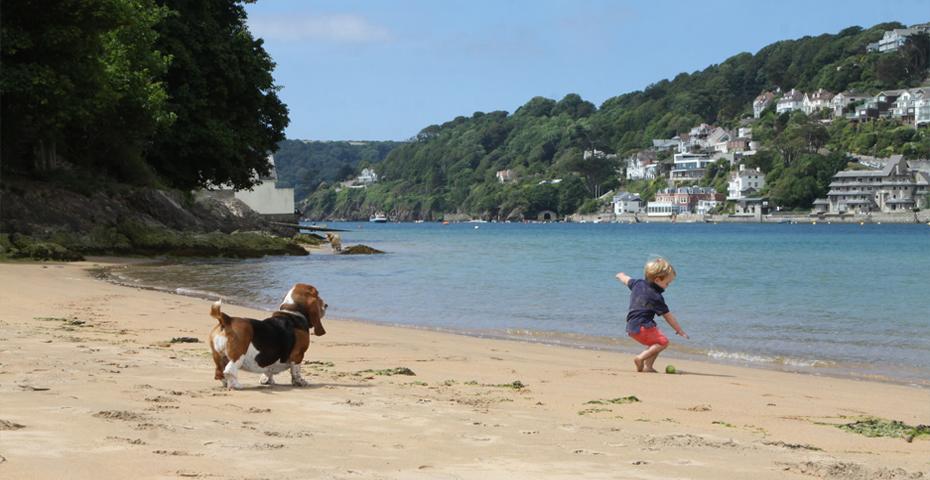 Dog Walks Dartmouth