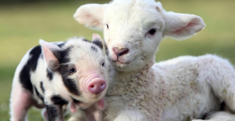 Easter events in South Devon at Pennywell Farm