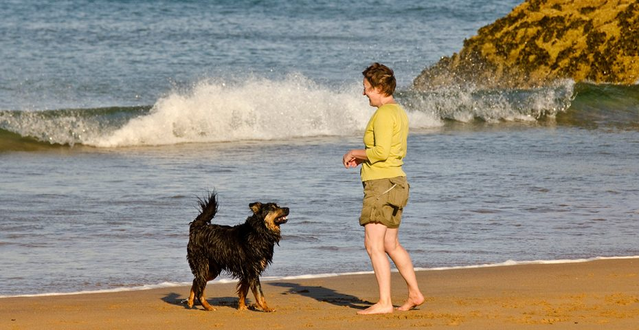 Dog friendly beaches in South Devon - Mattiscombe Beach