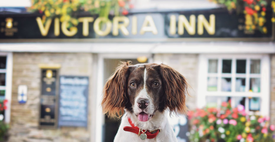 Dog-friendly pubs in South Devon The Victoria Inn
