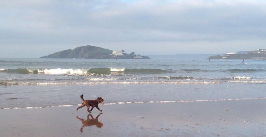 Bantham beach dog