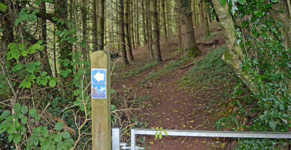 Dartmouth to Dittisham walk - Into the Woodland