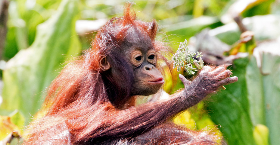 Things to do in South Devon_zoo