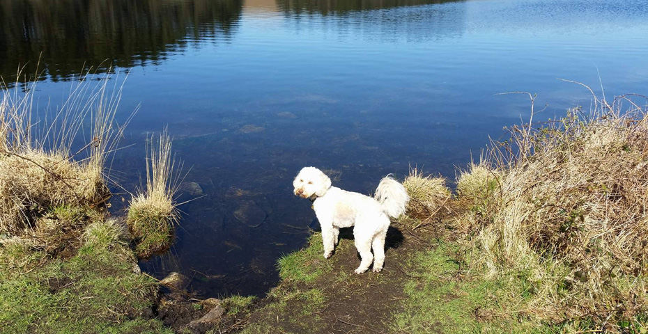 Slapton Sands - Slapton Ley dog friendly