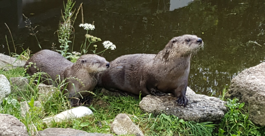 Things to do in South Devon_otter