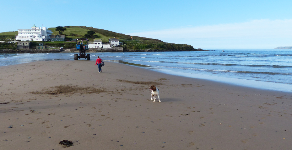 Bigbury-on-Sea beach near Burgh Island is dog-friendly
