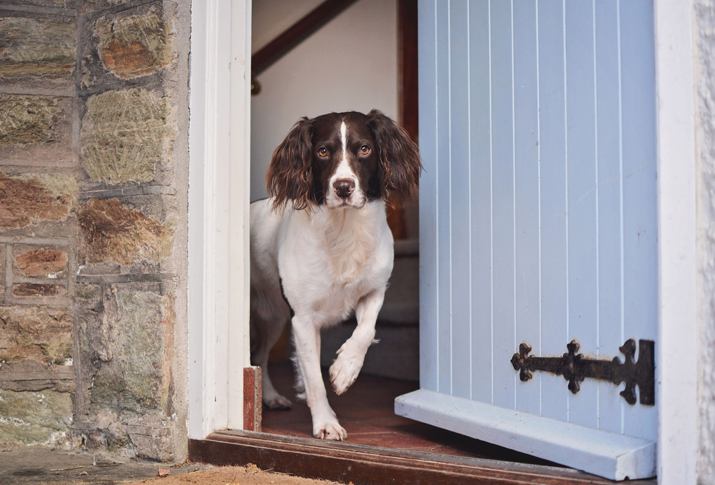 Should I make my holiday home dog-friendly? Dog-friendly holiday let