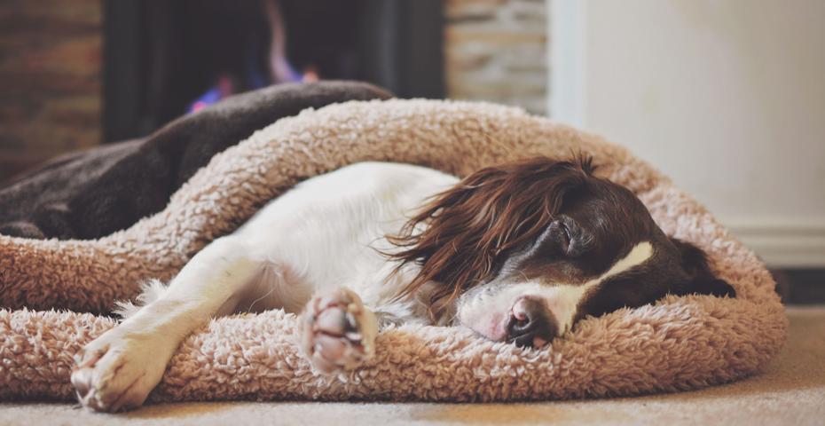 Should I make my holiday cottage dog-friendly (1)