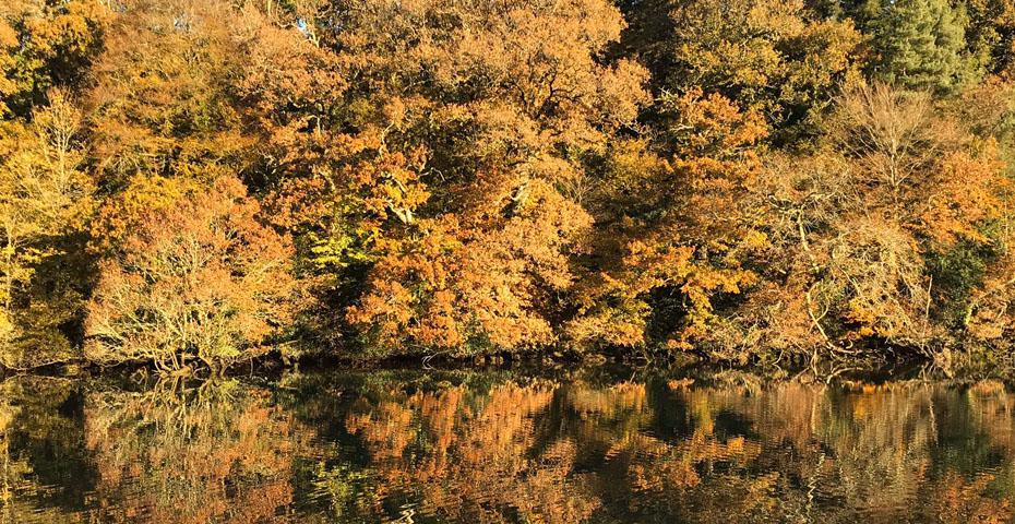 Autumn in South Devon
