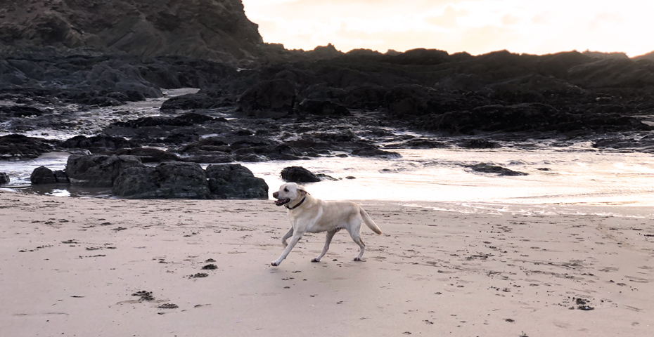Dog running on Batham Beach
