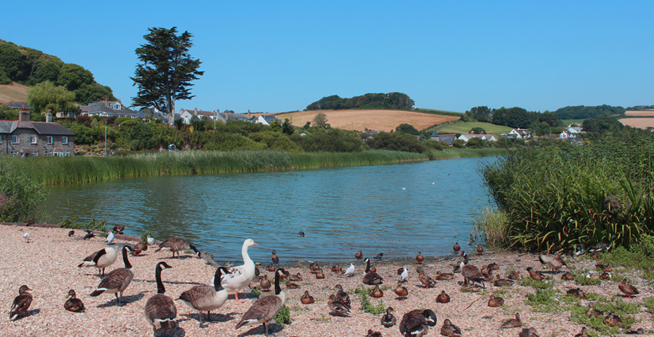 Slapton Sands - things to do nearby