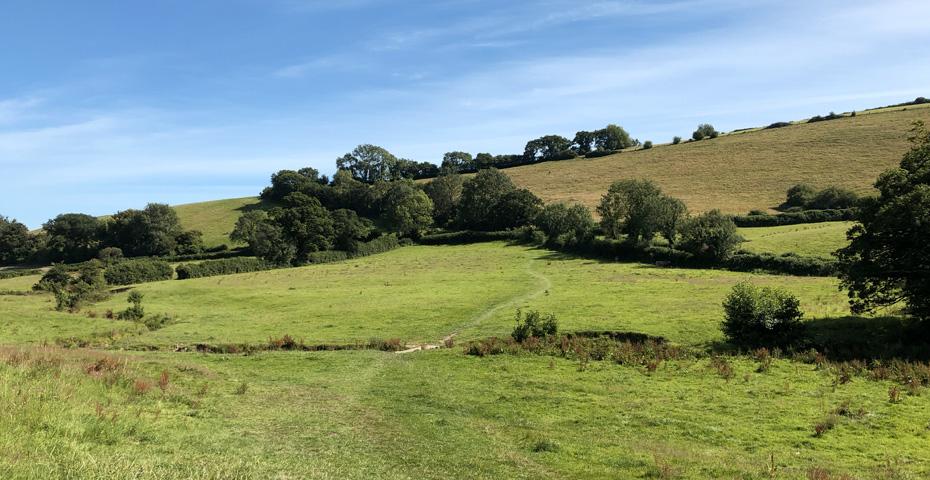 Modbury meadow