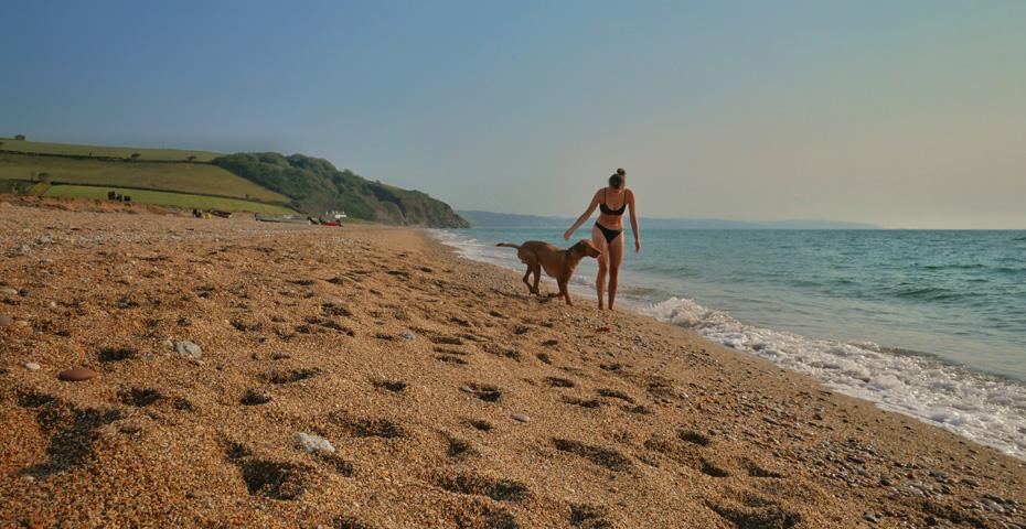 Beesands Beach dog friendly