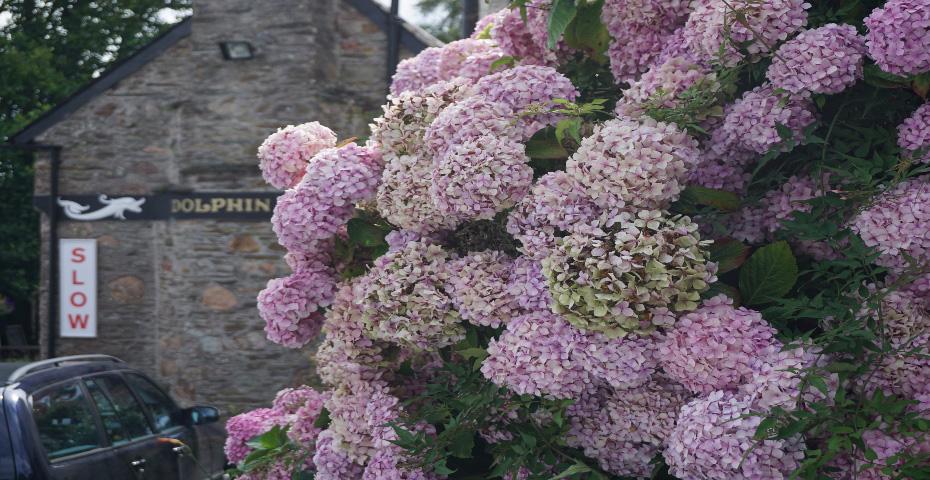 Kingston flowers in bloom