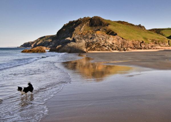 Autumn in south devon dog friendly beaches